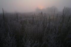 在用霜冷的有雾的早晨盖的森林附近的草甸 免版税库存图片