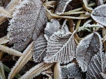 在用霜报道的地面上的叶子 库存照片