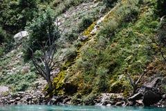 在用青苔盖的山的干树 素拉峡谷,达吉斯坦 免版税库存照片