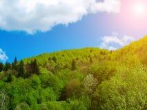 在用绿色木头盖的山的大白色云彩我 免版税图库摄影