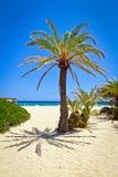 在田园诗Vai海滩的克里特岛枣椰子结构树 库存照片
