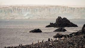 在甲晕海岛上的Chinstrap企鹅广告巨大的冰山在南极洲 免版税库存照片