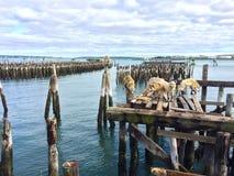 在甲板小游艇船坞江边的动物标本剥制术狼 免版税图库摄影