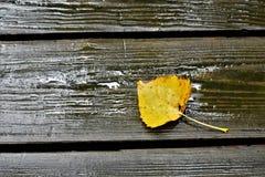 在甲板的叶子 图库摄影