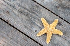 在甲板的海星 库存图片
