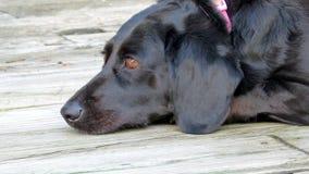 在甲板的狗 免版税库存照片