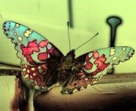 在甲板的美丽的特写镜头蝴蝶有颜色的 图库摄影