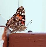 在甲板的美丽的特写镜头蝴蝶 库存照片