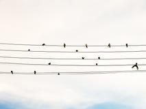 在电导线的燕子喜欢乐谱或吉他绳子 库存图片