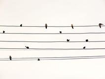 在电导线的燕子喜欢乐谱或吉他绳子 免版税库存图片