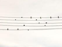在电导线的燕子 库存照片