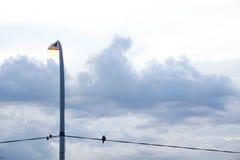 在电导线的鸟与看天空的街灯 免版税图库摄影