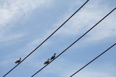 在电导线的鸟 库存图片