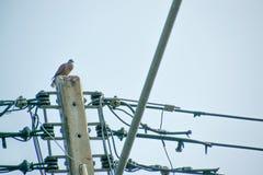 在电岗位的鸟 免版税库存照片