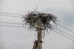 在电杆的鹳巢 免版税库存照片
