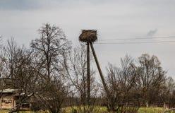 在电杆的鹳巢 免版税图库摄影