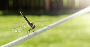 在电汇的蜻蜓 库存图片