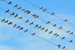 在电汇的鸟 免版税库存照片