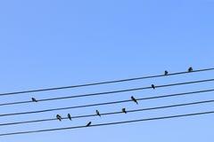 在电汇的鸟 免版税库存图片
