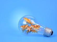 在电灯泡的创造性的金鱼在蓝色 库存图片