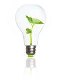 在电灯泡里面的绿色植物 免版税库存照片