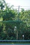 在电线杆的入侵的藤 图库摄影