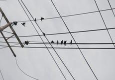 在电缆的鸟 免版税库存照片
