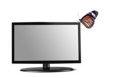 在电视上的蝴蝶 库存照片