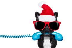 在电话圣诞节圣诞老人帽子的狗 图库摄影