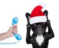 在电话圣诞节圣诞老人帽子的狗 免版税库存照片