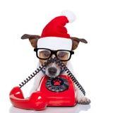 在电话圣诞节圣诞老人帽子的狗 免版税库存图片
