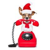 在电话圣诞节圣诞老人帽子的狗 库存照片