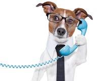 在电话的企业狗 免版税库存照片