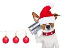 在电话的狗 免版税库存照片