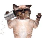 在电话的猫有罐头的 免版税库存图片