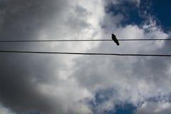 在电话线的孤独的鸟 免版税库存照片