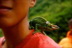 在男孩肩膀的有角的蜥蜴宠物  库存图片