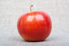 在画布的Apple 免版税库存照片