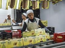 在番木瓜包装的妇女工作 库存图片