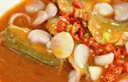 在番茄酱的鲭鱼能食物顶部切片辣椒和青葱在盘 免版税库存照片