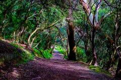 在登上维多利亚,惠灵顿,新西兰的鬼的足迹 库存照片
