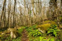 在登上罗杰斯山的阿巴拉契亚足迹在弗吉尼亚 免版税库存图片