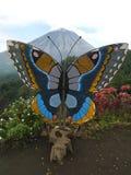 在登上设置的蝴蝶Inerie Manulalu Bajawa 免版税图库摄影