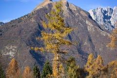 在登上Serva,贝卢诺,白云岩的秋天 图库摄影