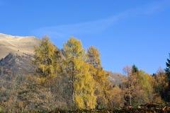 在登上Serva,贝卢诺,白云岩的秋天 免版税库存图片