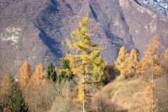 在登上Serva,贝卢诺,白云岩的秋天 库存照片