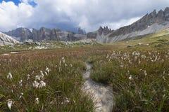 在白云岩的一条小的小河环境美化 一点在山的河小河,白云岩,Sudtirol,特伦托自治省女低音阿迪杰,意大利 库存照片