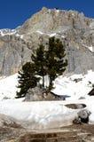在白云岩的树 免版税图库摄影