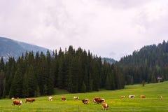 在白云岩的田园诗夏天风景 图库摄影