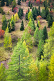 在白云岩,意大利的秋天颜色 免版税库存照片